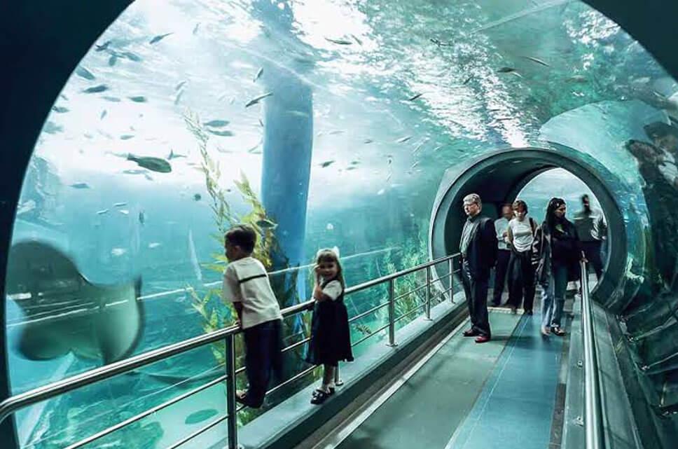 Ocean Life Melbourne Aquarium